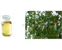 Pure Natural Bulk Brown/Yellow Camphor Oil With Lowest Price