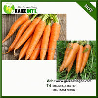Special 2015 China Fresh Carrot