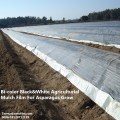 UV Resistant Bi-color Black & White Agricultural Mulch Film For Asparagus Grow In Europe
