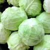 the largest supplier of fresh cabbage and fresh vegetables