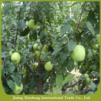 China fresh green apple with best price