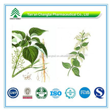 GMP Certificate Popular Herbal Urtica Dioica Extract inherbal extract