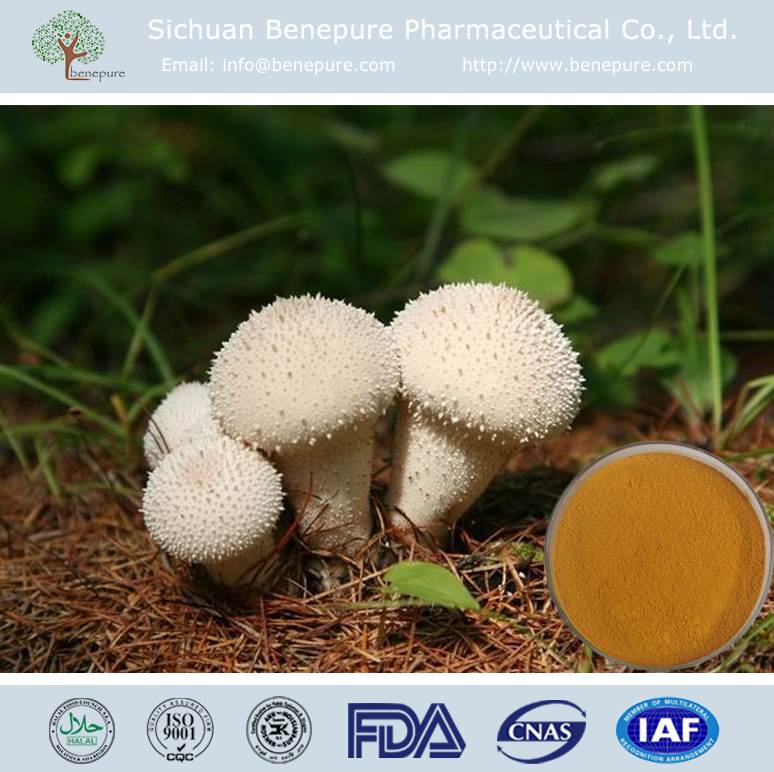 Chinese manufacture supply Lasiosphaera Extract powder Organic Mabo P.E. for pharmaceutical use