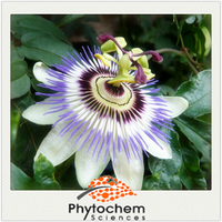 Natural Herbal Product Fruit part Passion Flower Extract