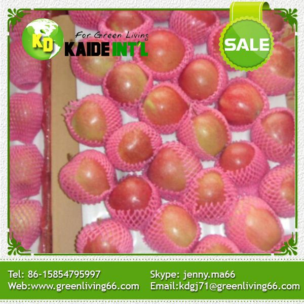 Common Cultivation ,Chinese Fuji Apples
