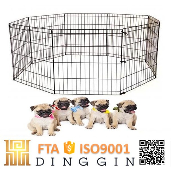 Animals baby play yard dog fence