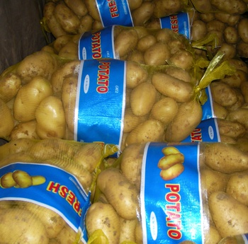 new crop China fresh potato in mesh bag