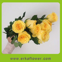 best hot sale fresh cut flowers kenya roses with redness colorful ERKA TRADE COMPANY