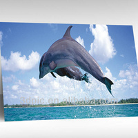 PET vivid ocean animal dolphin 3d pictures