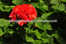 High Quality Geranium Extract Geranamine