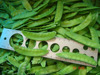 2016 frozen pea pods Four Season Foods exporting good quality