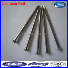 High Quality Common Nail From Factory(ISO9001)