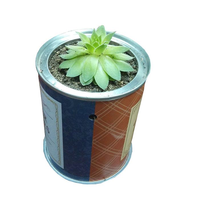 Flower Seed Metal Round Easy Open Tin Can With Plastic Lid