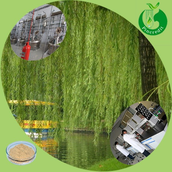 Baskets birch bark/Willow Bark Extract/birch bark extract powder