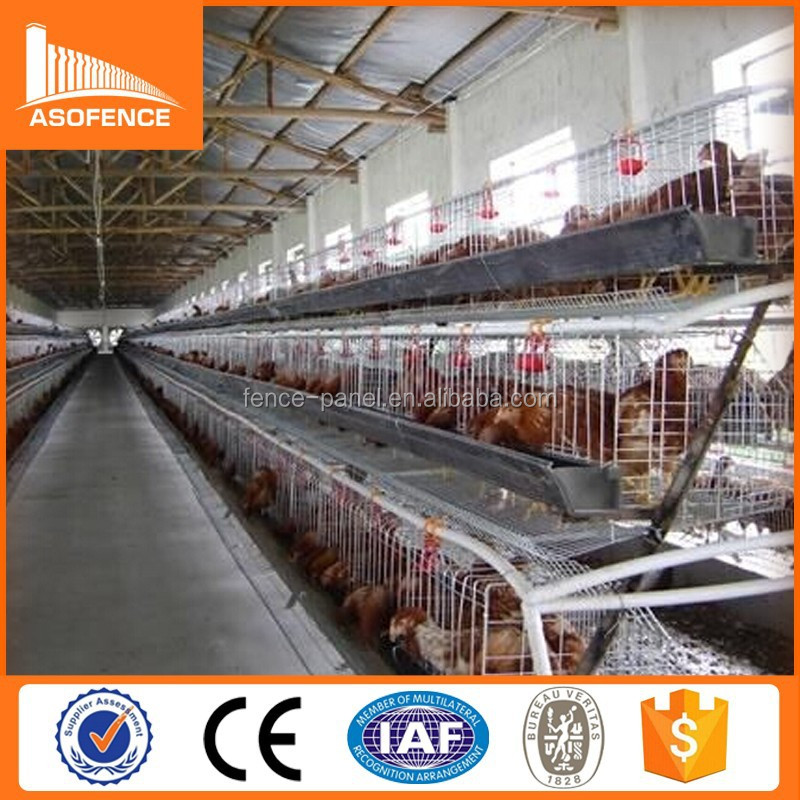 China wholesale chicken egg layer cages / cages chicken / used chicken cages for sale