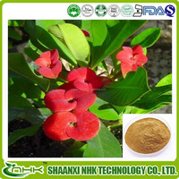 Pure Natural plant extract Crown of Thorns Extract Powder