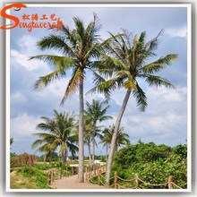 A wide variety of new products of outdoor japanese trees and plants plastic outdoor palm plants trees
