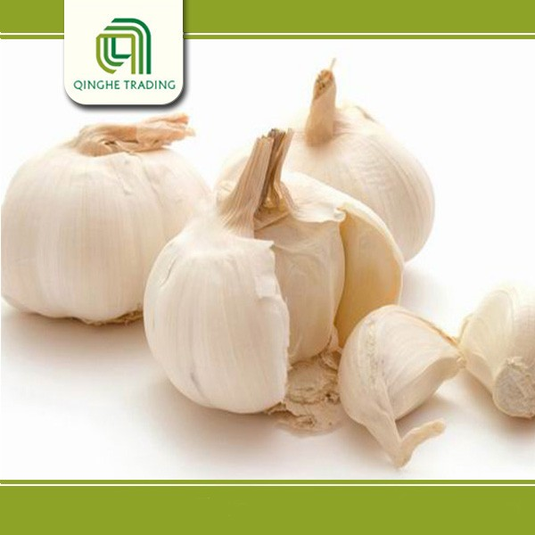 Brand new fresh garlic for sale with great price