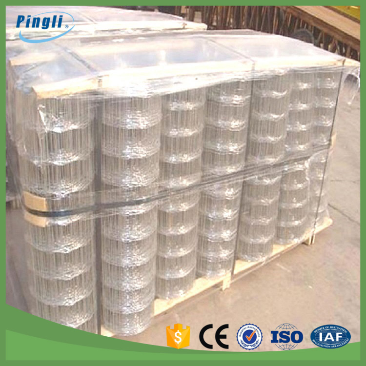 Galvanized Welded Wire Mesh fence cattle panels