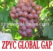 Red globe grapes size