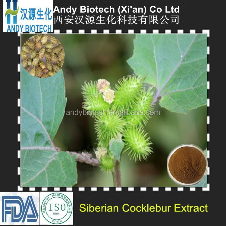 One Hundred Percent Good Quality Siberian Cocklebur Fruit Extract