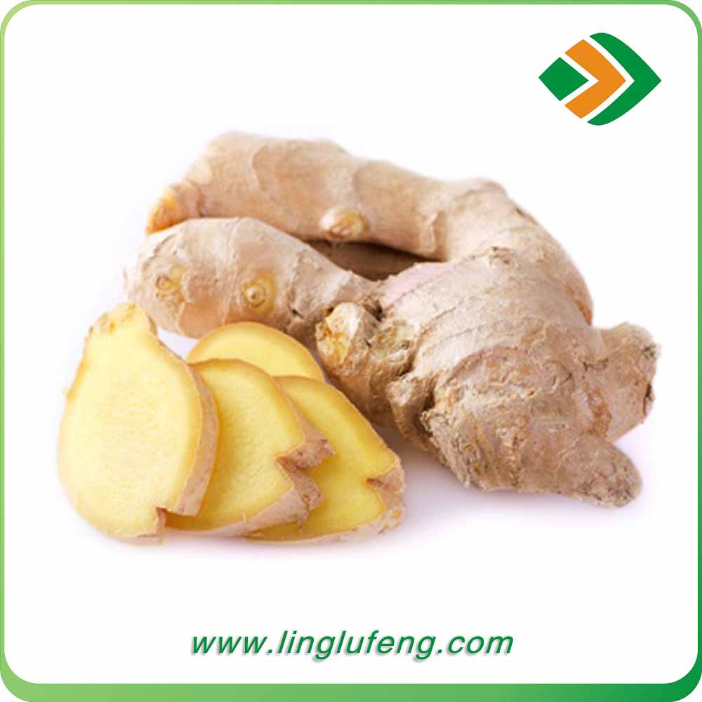 wholesale bulk ginger market price fresh nigerian ginger