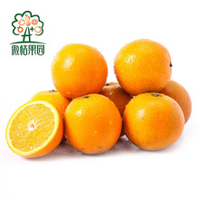 Fresh list of yellow fruits for juice