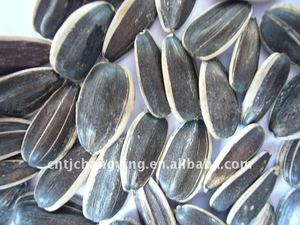Raw American Sunflower Seeds 5009
