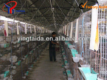 high quality metal pigeon cage