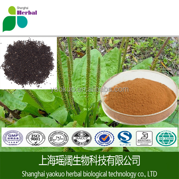 Seed Of Asiatic Plantain Extract relieve inflammation,diuresis,improve eyesight,eliminate phlegm