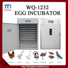 Professional fertilized bird eggs with CE certificate