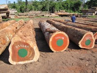 Mahogany, Oak , Bibolo, azobe, iroko, makore, mouvingui logs for sale, good price