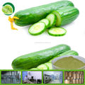 Cucumber Extract Powder