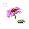 New products favorable price natural material make capsules liquid and powder form Echinacea Extract