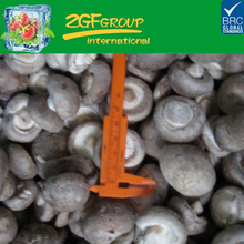 hot sell blanched iqf champignon mushroom cut healthy food