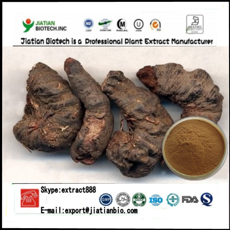 High quality Bistort Rhizome Extract