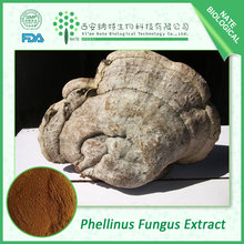 Factory price pure natural Anti Cancer products Phellinus Fungus Extract / Phellinus Igniarius Extract powder