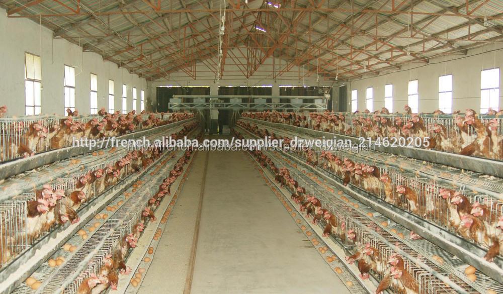 Meilleur prix batterie poules pondeuses cages cage for Top 10 des poules pondeuses
