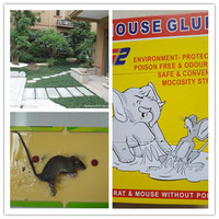 Pest Control Product, Glue Mouse Rat Catch Plate Sticky Board, Mouse glue Trap For Garden