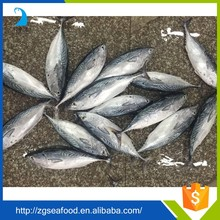 Healthy and Delicious bulk packing whole bonito tuna