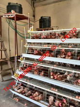 Design Layer Chicken Cages For Kenya Poultry Farm ( Enclosed Kenyan Clients Contact Information)