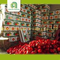 farm new crop color sweet bell pepper from shouguang canned sweet peppers with high quality