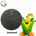 Organic Fertilizer Classification Seaweed Type Seaweed Extract Powder