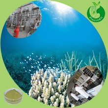 Dried seaweed powder fucoxanthin10% seaweed extract