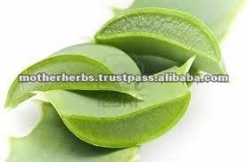 Aloe vera plante m dicinale id de produit 119885768 - Aloe vera plante prix ...