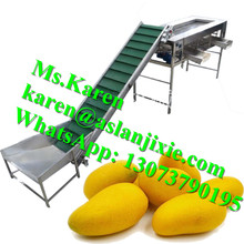 mango grading machine / oval fruit and vegetable grader machine / automatic feeder oval fruit mango sorter machine