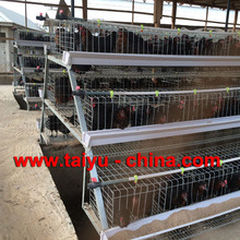 Poltry Equipment Automatic Layer Chicken Cage for 1000 Birds