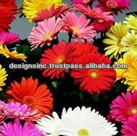variety quality wholesale fresh cut flower in india /design roses/jasmine/decorative natural flowers