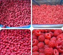 2017 Wholesale price from China new crop Frozen IQF raspberry