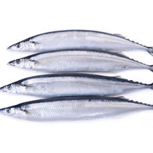Frozen Canned Pacific Saury Fish/Mackerel Pike for sale/market